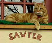 Picture of Sawyer relaxing on top of his workstation